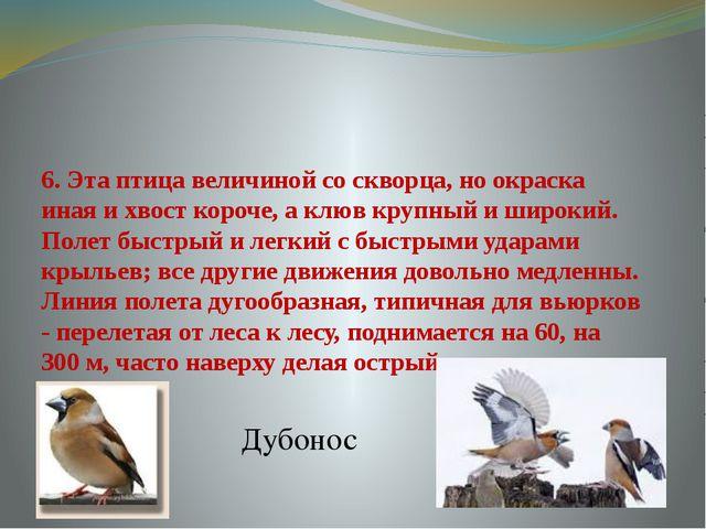 6. Эта птица величиной со скворца, но окраска иная и хвост короче, а клюв кру...