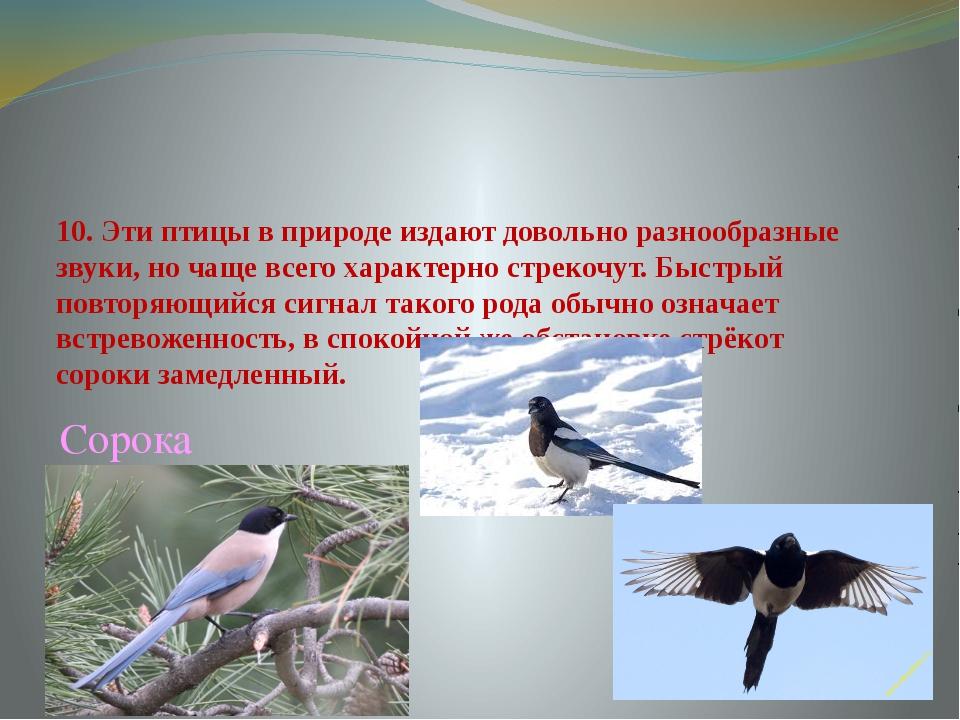 10. Эти птицы в природе издают довольно разнообразные звуки, но чаще всего ха...