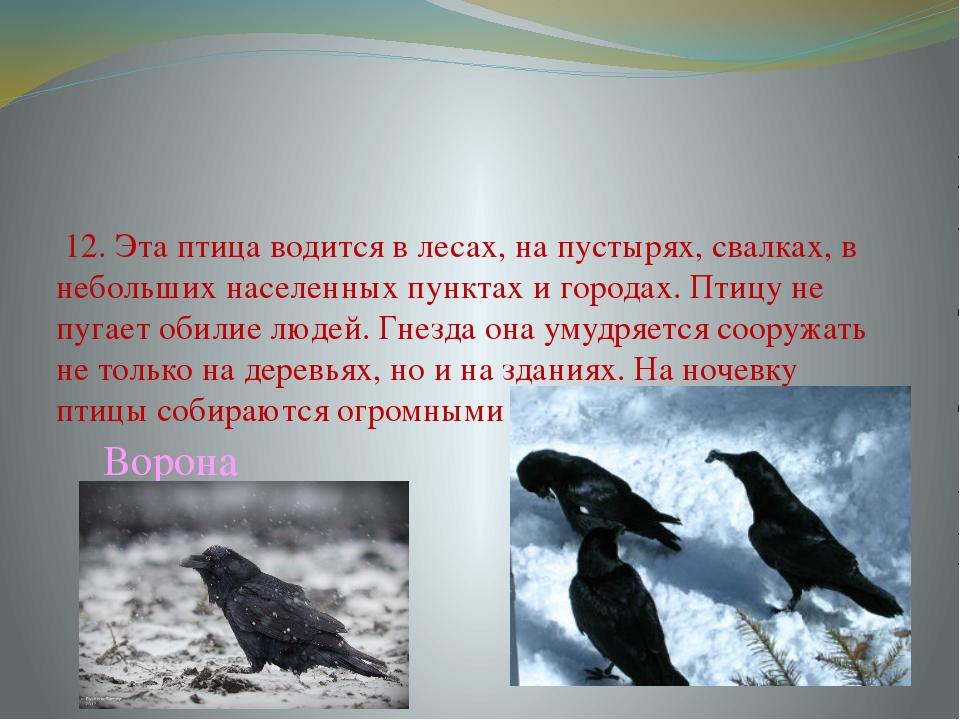 12. Эта птица водится в лесах, на пустырях, свалках, в небольших населенных...