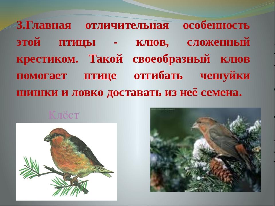 3.Главная отличительная особенность этой птицы - клюв, сложенный крестиком. Т...