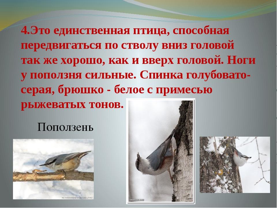 4.Это единственная птица, способная передвигаться по стволу вниз головой так...