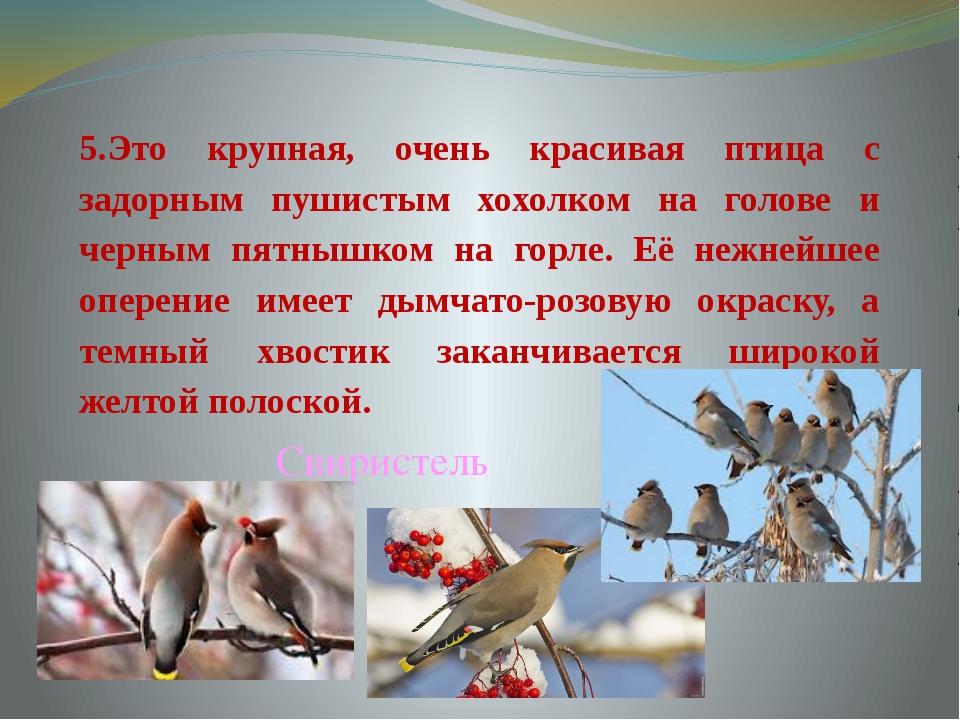 5.Это крупная, очень красивая птица с задорным пушистым хохолком на голове и...