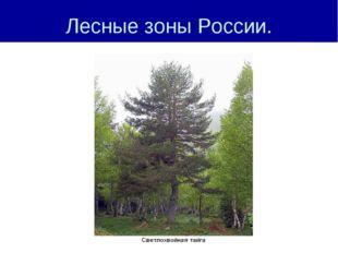 Лесные зоны России.