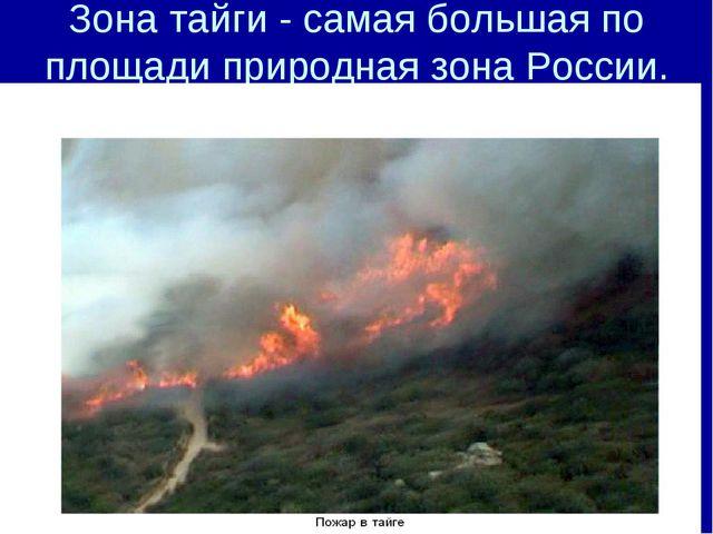 Зона тайги - самая большая по площади природная зона России.