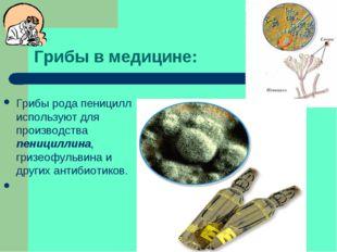 Грибы в медицине: Грибы рода пеницилл используют для производства пенициллина