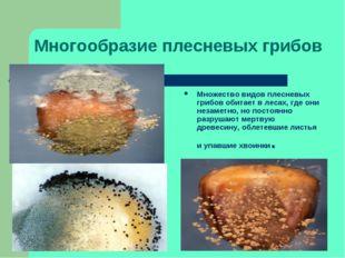 Многообразие плесневых грибов Множество видов плесневых грибов обитает в леса