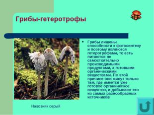 Грибы-гетеротрофы Грибы лишены способности к фотосинтезу и поэтому являются г