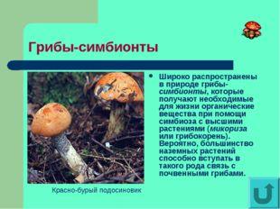 Грибы-симбионты Широко распространены в природе грибы-симбионты, которые полу