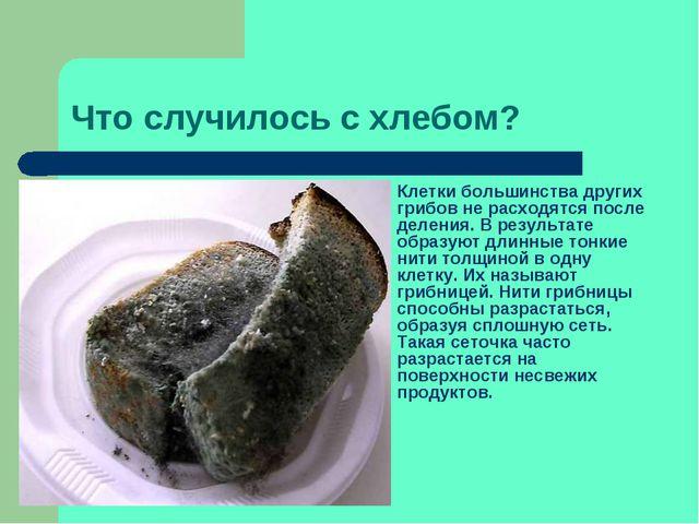 Что случилось с хлебом? Клетки большинства других грибов не расходятся после...