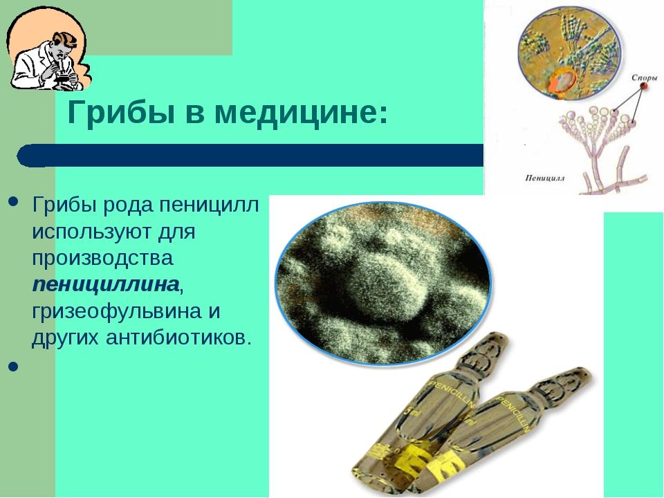 Грибы в медицине: Грибы рода пеницилл используют для производства пенициллина...