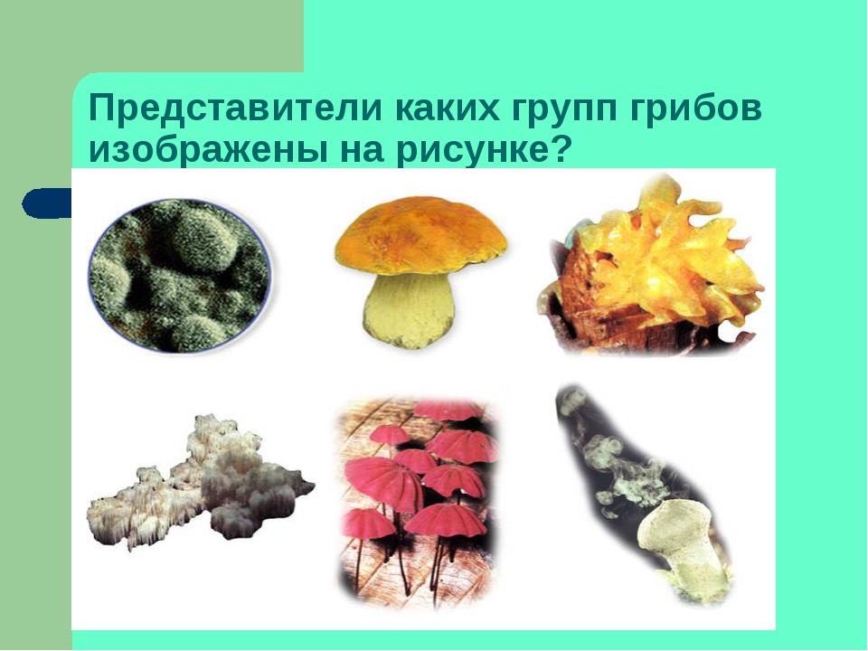Представители каких групп грибов изображены на рисунке?
