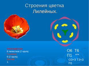 Строения цветка Лилейных. Околоцветник 6 лепестков (2 круга) Тычинки 6 (2 кру