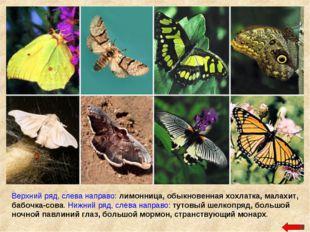Верхний ряд, слева направо: лимонница, обыкновенная хохлатка, малахит, бабочк