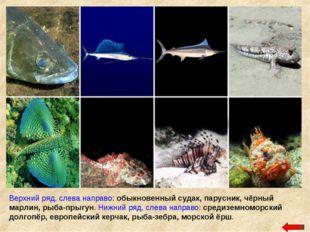 Верхний ряд, слева направо: обыкновенный судак, парусник, чёрный марлин, рыба