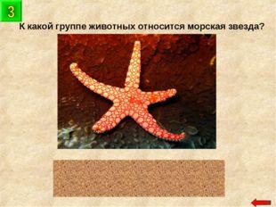 К какой группе животных относится морская звезда? иглокожие