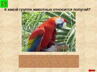 К какой группе животных относится попугай? птицы