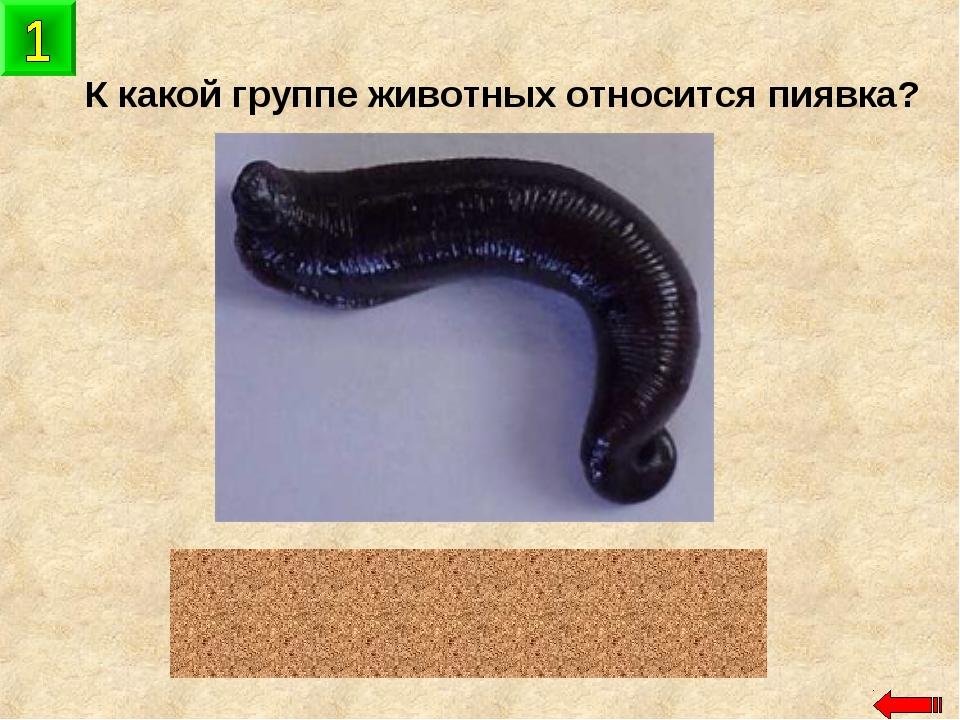 К какой группе животных относится пиявка? черви