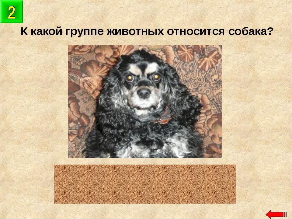 К какой группе животных относится собака? млекопитающие