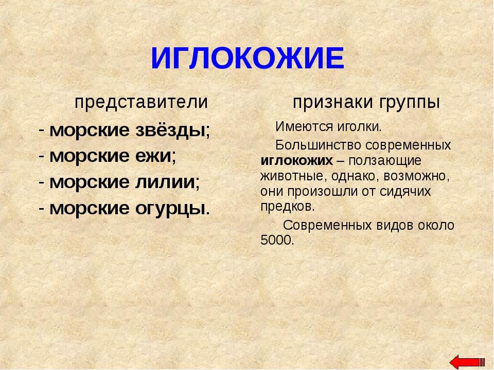 ИГЛОКОЖИЕ
