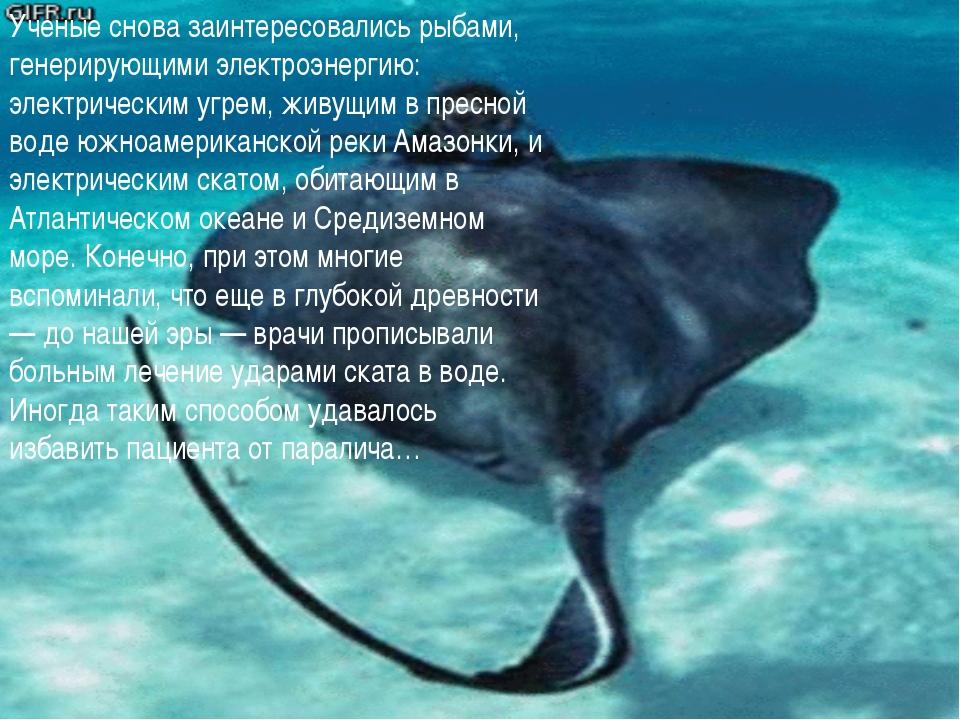 Ученые снова заинтересовались рыбами, генерирующими электроэнергию: электриче...