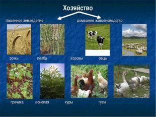 Хозяйство пашенное земледелие домашнее животноводство рожь полба коровы овцы