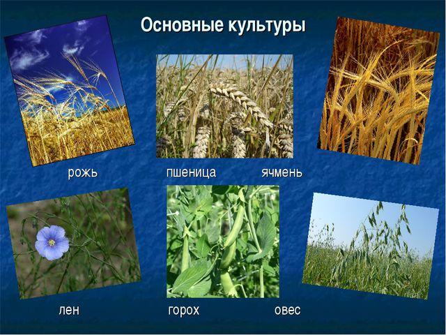 Основные культуры рожь пшеница ячмень лен горох овес