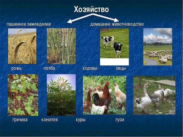 Хозяйство пашенное земледелие домашнее животноводство рожь полба коровы овцы...