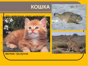 КОШКА Это животное дало название семейству, в которое входят и манул, и карак