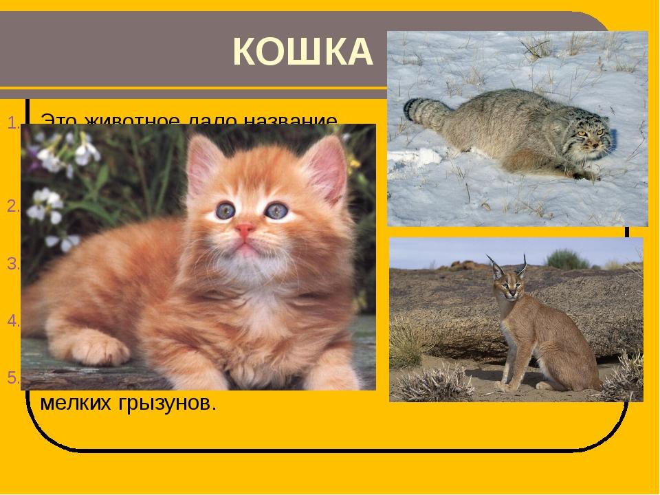 КОШКА Это животное дало название семейству, в которое входят и манул, и карак...
