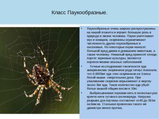 Класс Паукообразные. Паукообразные очень широко распространены на нашей плане