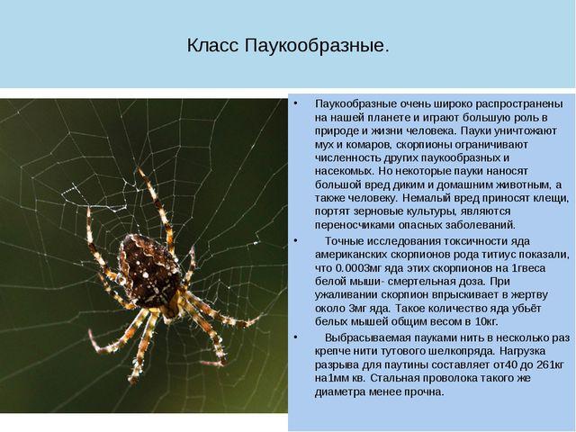 Класс Паукообразные. Паукообразные очень широко распространены на нашей плане...