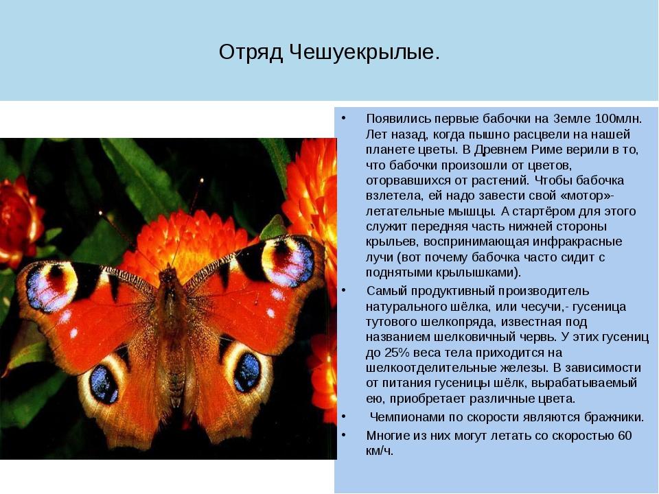 Отряд Чешуекрылые. Появились первые бабочки на Земле 100млн. Лет назад, когда...