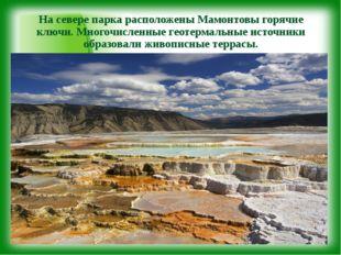 На севере парка расположены Мамонтовы горячие ключи. Многочисленные геотермал
