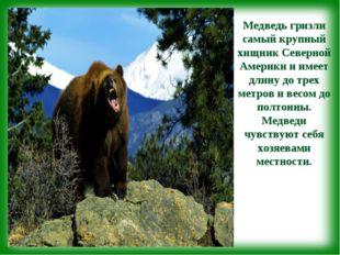 Медведь гризли самый крупный хищник Северной Америки и имеет длину до трех ме