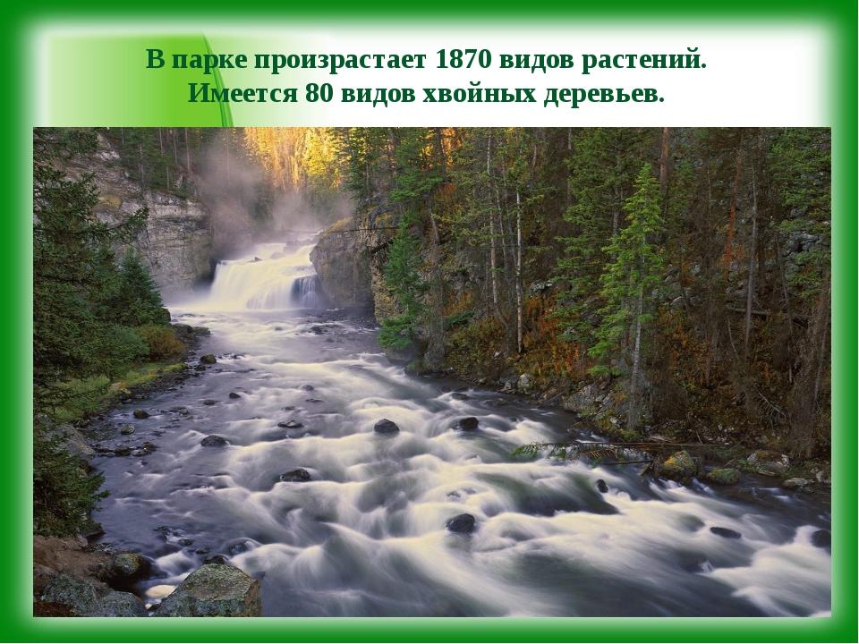 В парке произрастает 1870 видов растений. Имеется 80 видов хвойных деревьев.