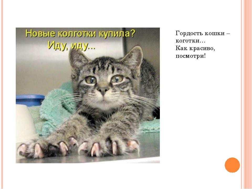 Гордость кошки – коготки… Как красиво, посмотри!