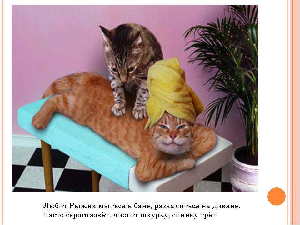 Любит Рыжик мыться в бане, развалиться на диване. Часто серого зовёт, чистит...