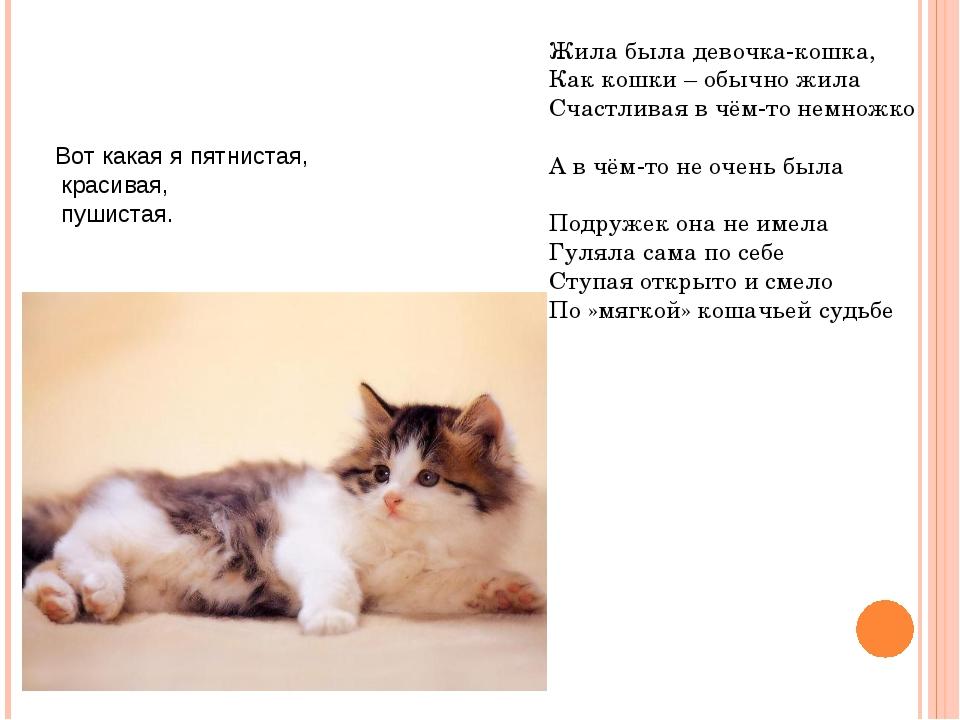 Вот какая я пятнистая, красивая, пушистая. Жила была девочка-кошка, Как кошк...
