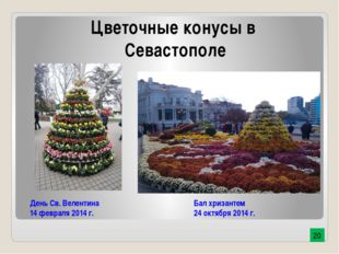 День Св. Велентина 14 февраля 2014 г. Бал хризантем 24 октября 2014 г. Цветоч
