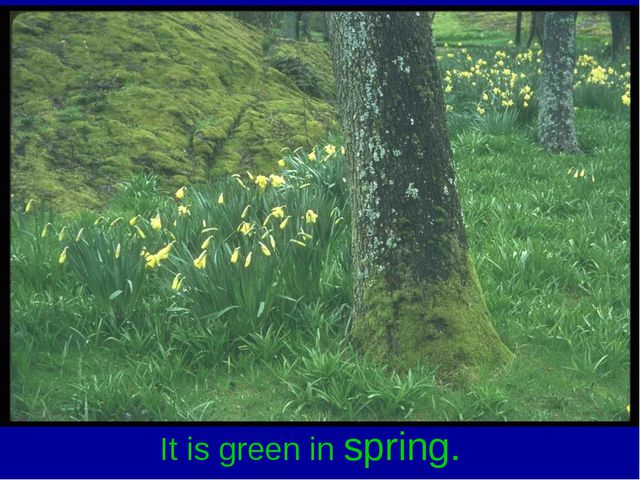 It is green in spring.