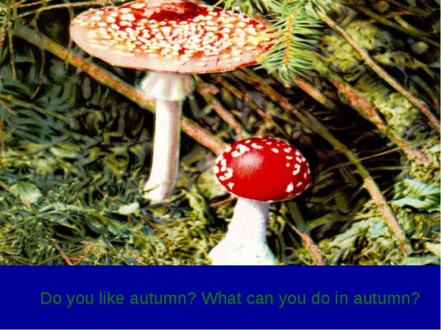 Do you like autumn? What can you do in autumn?