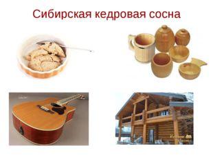 Сибирская кедровая сосна