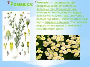 Ромашка: Ромашка—родмноголетнихцветковых растений семействаАстровые, ил