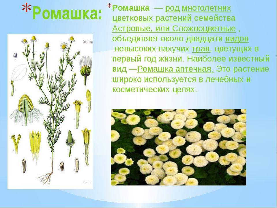 Ромашка: Ромашка—родмноголетнихцветковых растений семействаАстровые, ил...