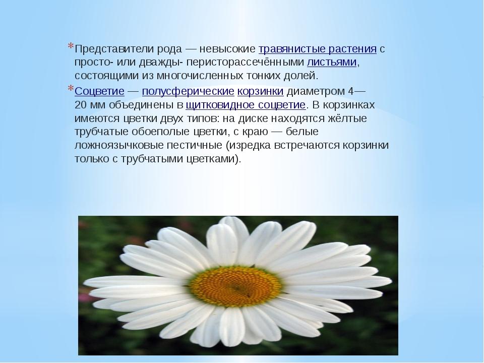Представители рода— невысокиетравянистые растенияс просто- или дважды- пер...