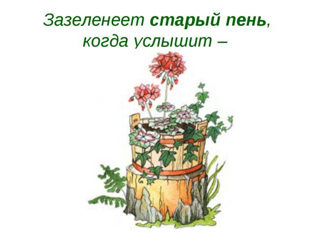 Зазеленеет старый пень, когда услышит –