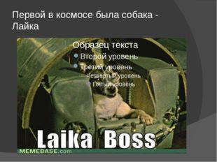 Первой в космосе была собака - Лайка