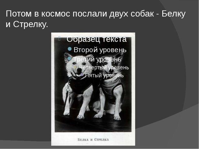 Потом в космос послали двух собак - Белку и Стрелку.