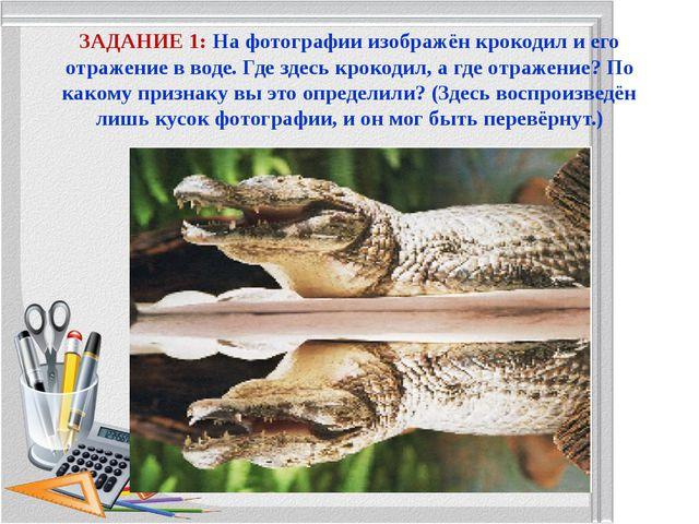ЗАДАНИЕ 1: На фотографии изображён крокодил и его отражение в воде. Где здесь...