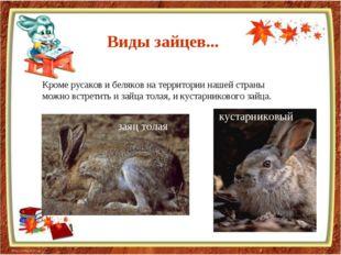 Кроме русаков и беляков на территории нашей страны можно встретить и зайца то